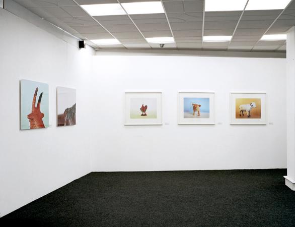 Mihailo Vasiljevic, Animals, Gradska Galerija, Pozega, 2012, 001